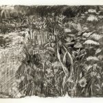 Gabriel Edward Adams, Garden With Monarda, Charcoal Drawing